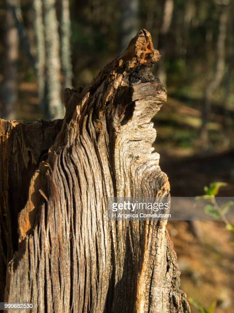 Closeup of old stump in forest with sunshine