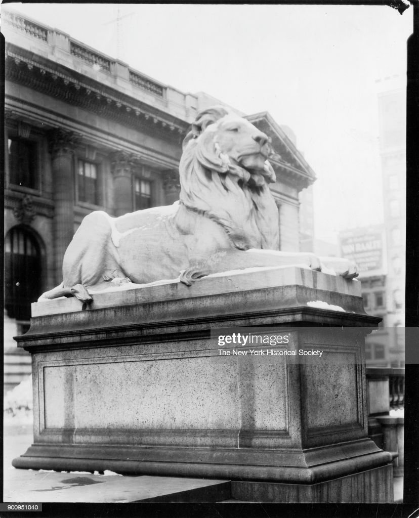 Lion At The Library : News Photo
