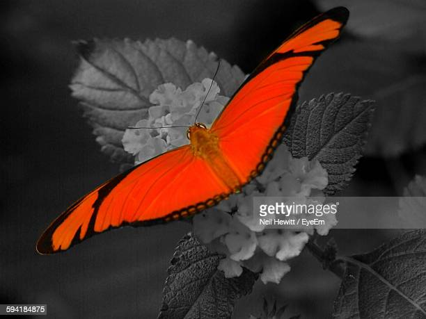 Close-Up Of Orange Butterfly On Flower