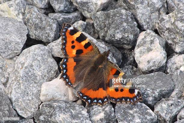 close-up of orange butterfly on rocks - howard,_wisconsin stock pictures, royalty-free photos & images