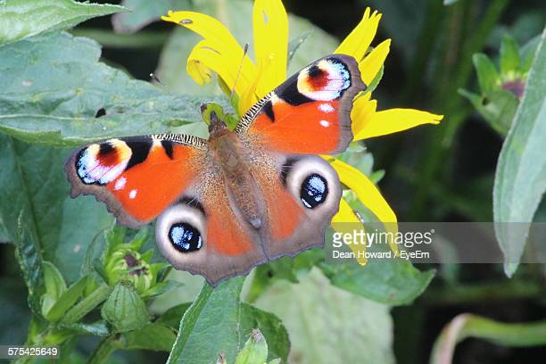 close-up of orange butterfly pollinating on flower - howard,_wisconsin stock pictures, royalty-free photos & images