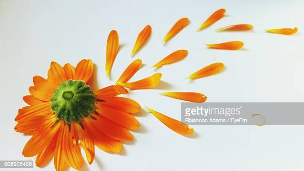 Close-Up Of Orange Flower And Petals Against White Background