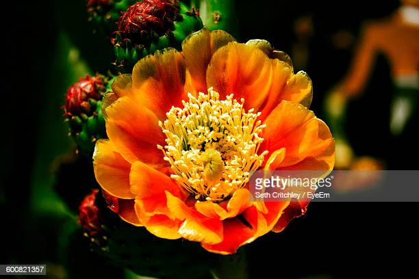 close-up of orange flower blooming outdoors - tucson stock pictures, royalty-free photos & images