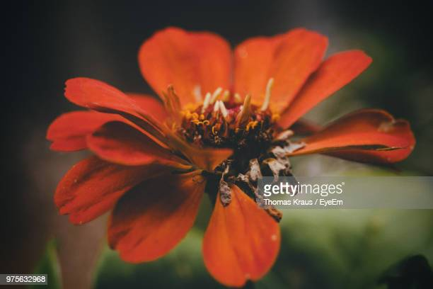 Close-Up Of Orange Flower