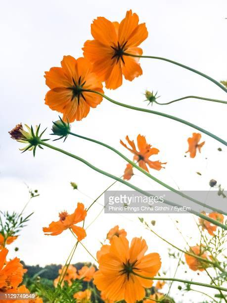 Close-Up Of Orange Flowering Plant Against Sky
