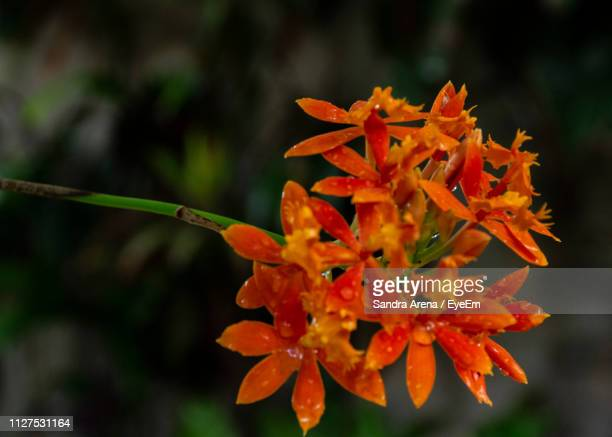 Close-Up Of Orange Flowering Plant