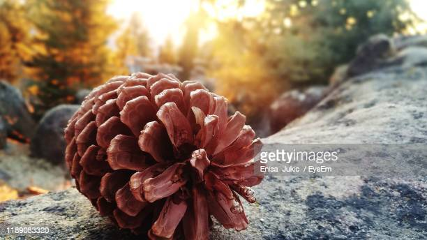 close-up of orange flowering plant - enisa jukic stock photos and pictures