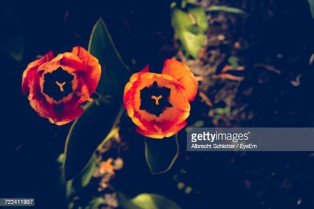 close-up of orange flowers blooming outdoors - albrecht schlotter stock pictures, royalty-free photos & images