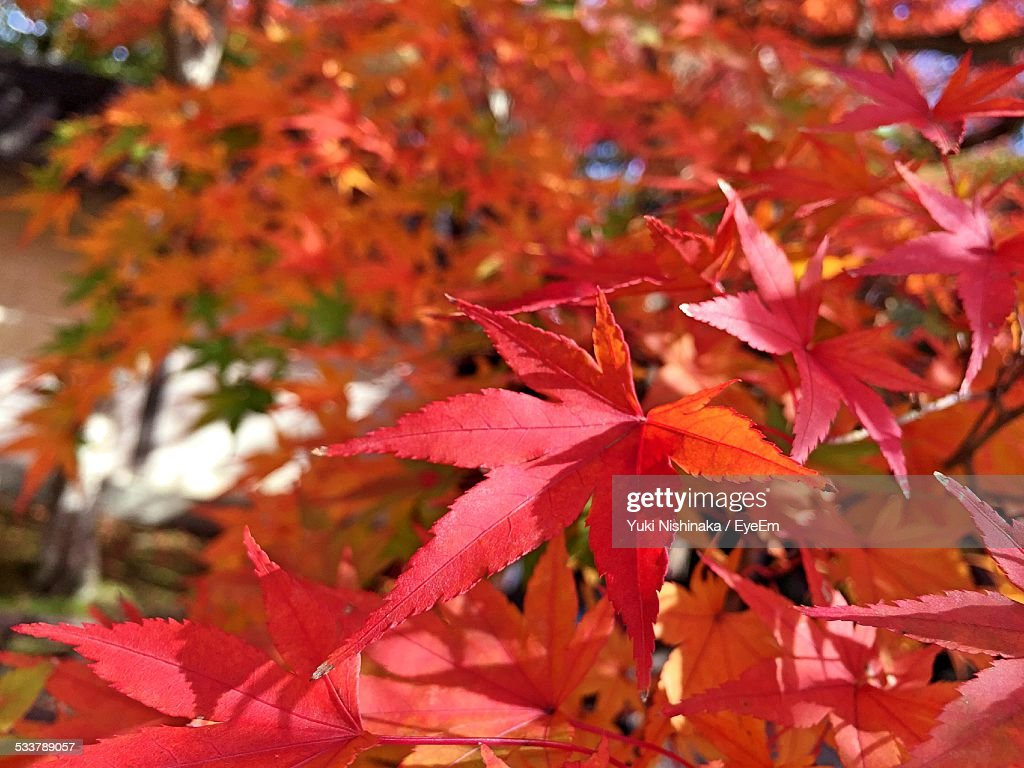 Close-Up Of Orange Leaves : Foto stock