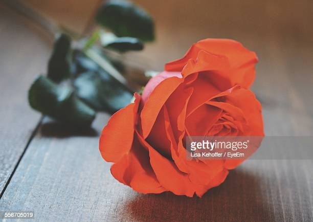 Close-Up Of Orange Rose On Table