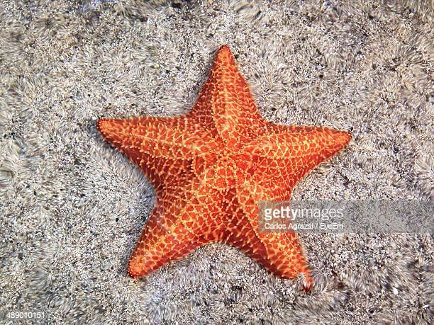 Close-up of orange starfish on sand
