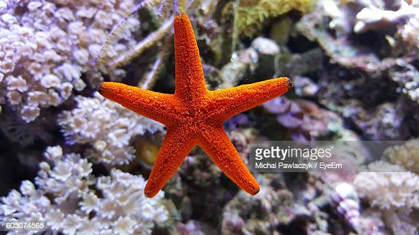 close-up of orange starfish - starfish stock pictures, royalty-free photos & images