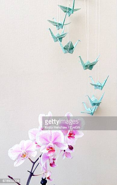 Close-up Of Orchids And Origami Decoration By Wall