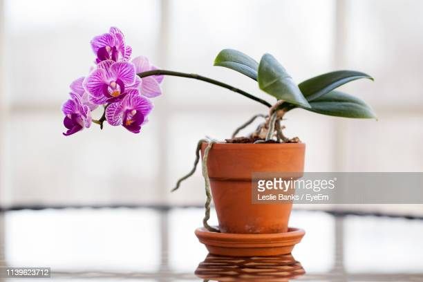 close-up of orchids growing in plant - orchid stock pictures, royalty-free photos & images