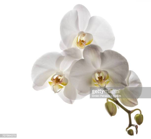 close-up of orchids - orchid flower stock pictures, royalty-free photos & images