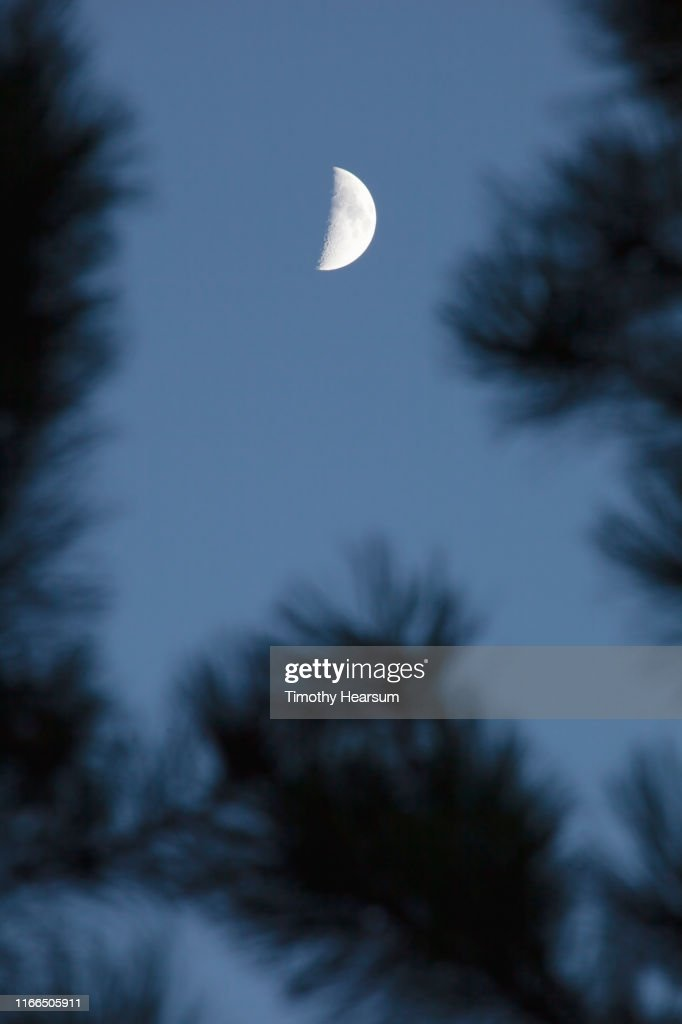 Close-up of out of focus Joshua Tree branches with dark sky and half moon above : Stock Photo