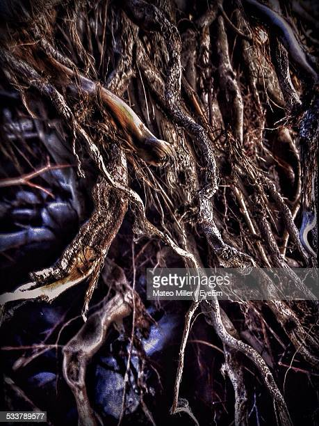 Close-Up Of Overgrown Tree Roots