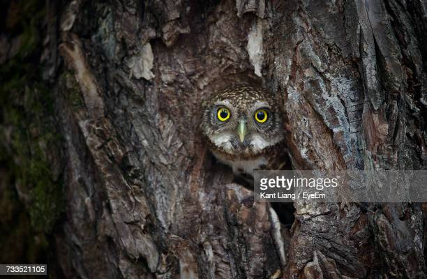 Close-Up Of Owl On Tree Trunk