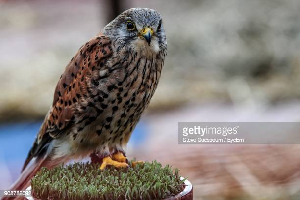 Close-Up Of Owl Perching On Potted Plant