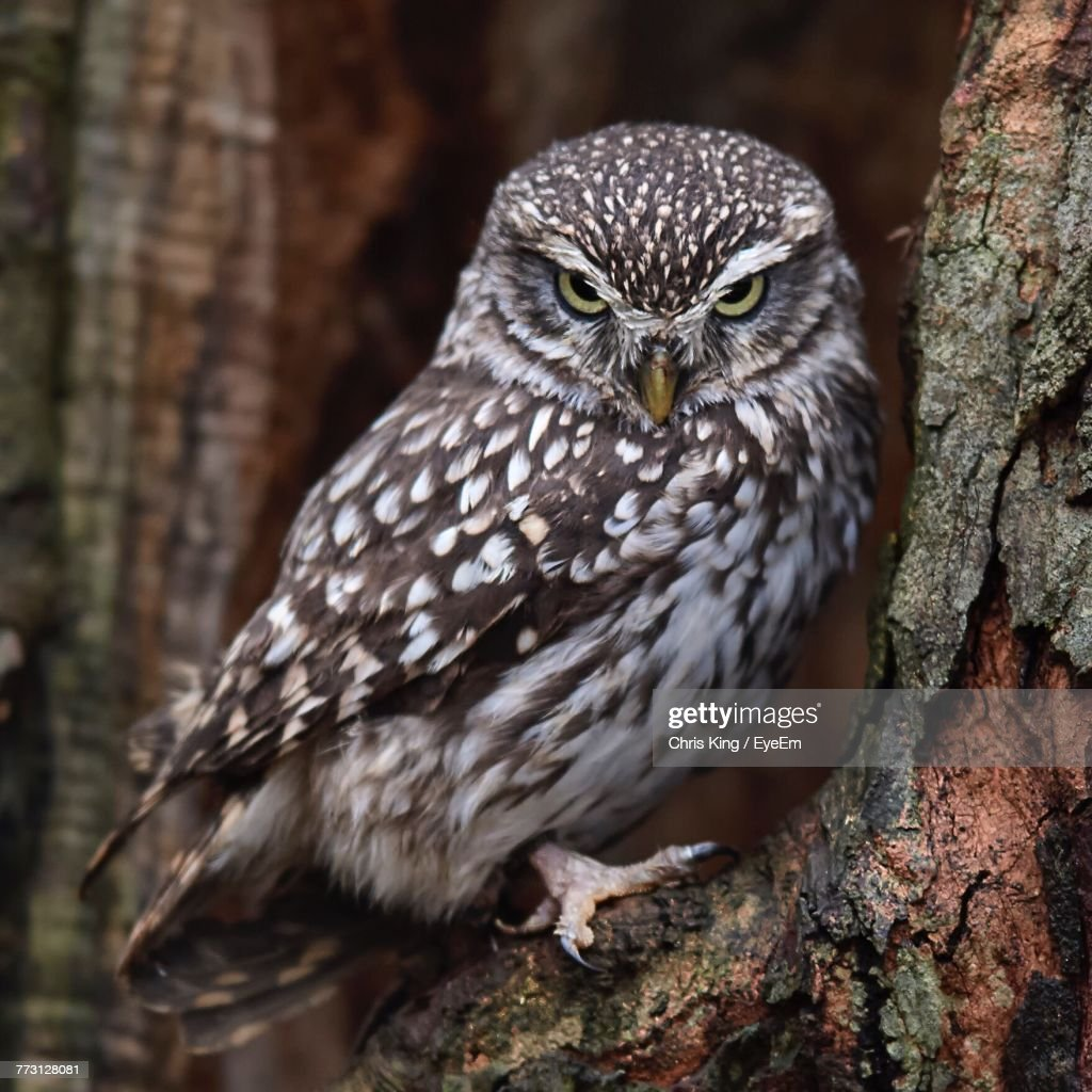 Close-Up Of Owl Perching On Tree : Photo
