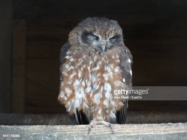 Close-Up Of Owl Perching On Wood