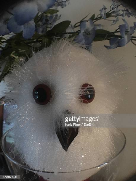 Close-Up Of Owl Toy In Glass Container
