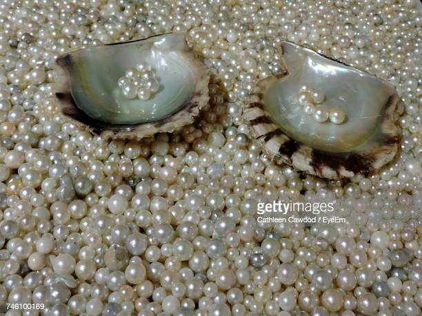 close-up of oysters on pearl - pearl jewellery stock pictures, royalty-free photos & images