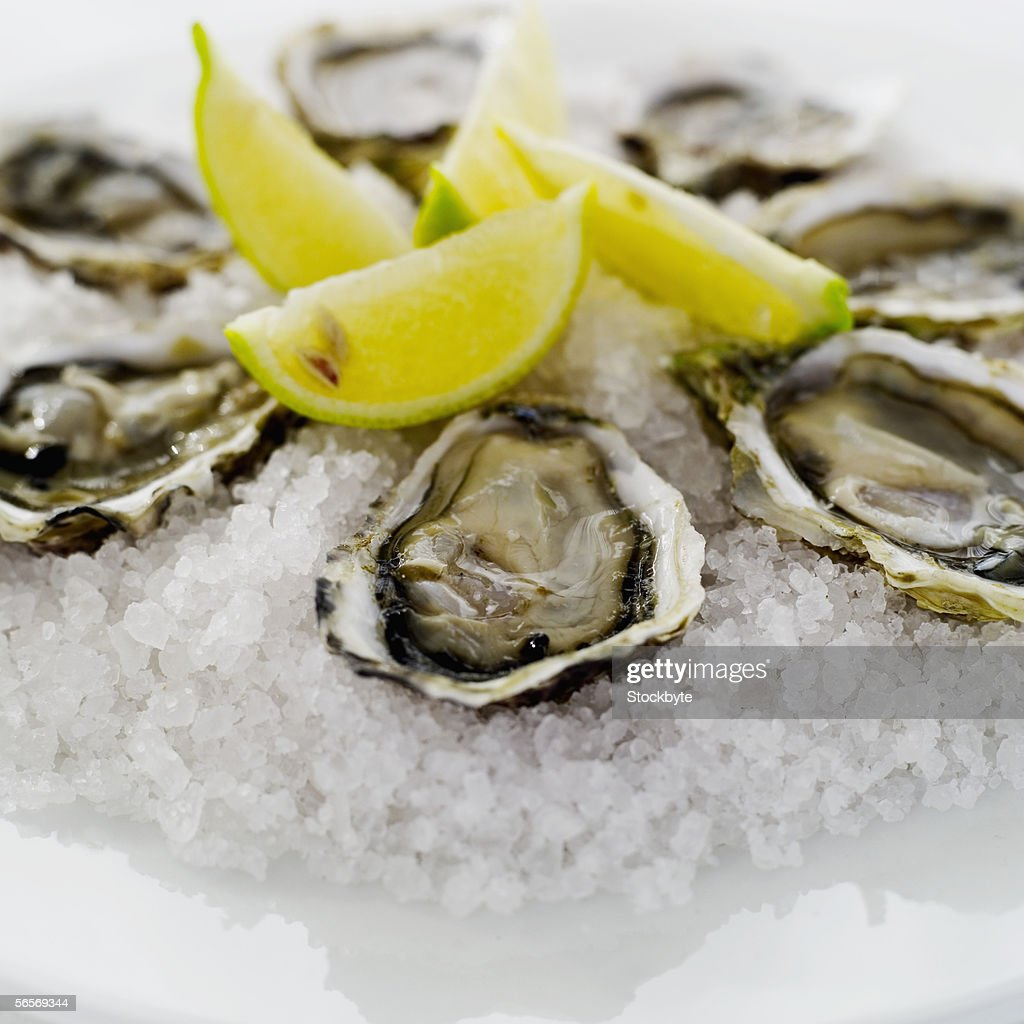 close-up of oysters served on crushed ice : Stock Photo