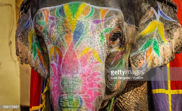 close-up of painted elephant - elephant head stock-fotos und bilder
