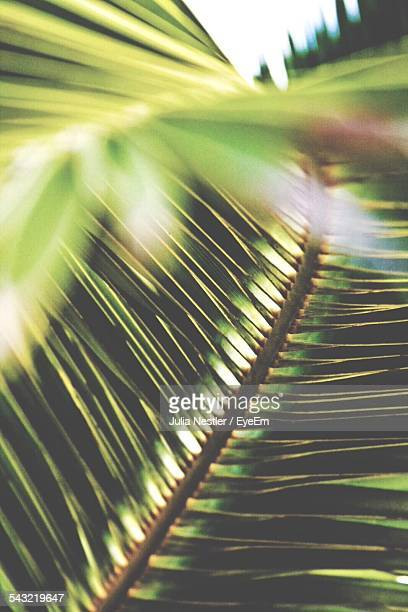 Close-Up Of Palm Fronds