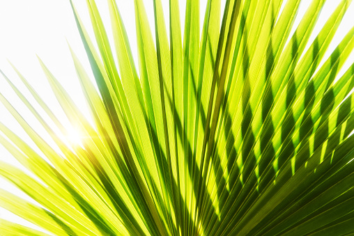 Close-up of palm leaf on white background - gettyimageskorea