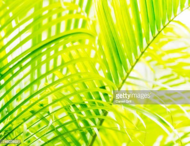 Close-up of palm leaf on white background