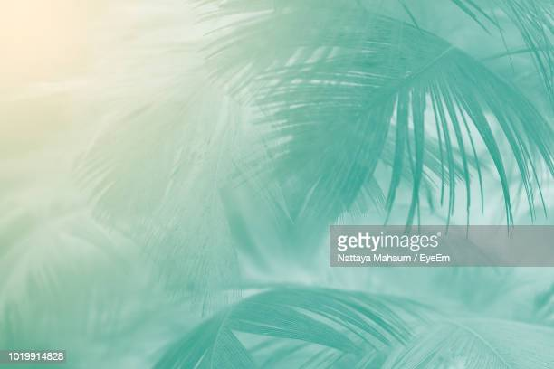 close-up of palm leaf - palm tree stock pictures, royalty-free photos & images