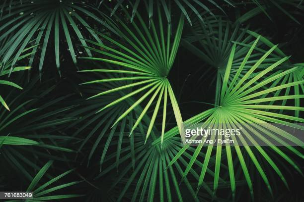 Close-Up Of Palm Leaf