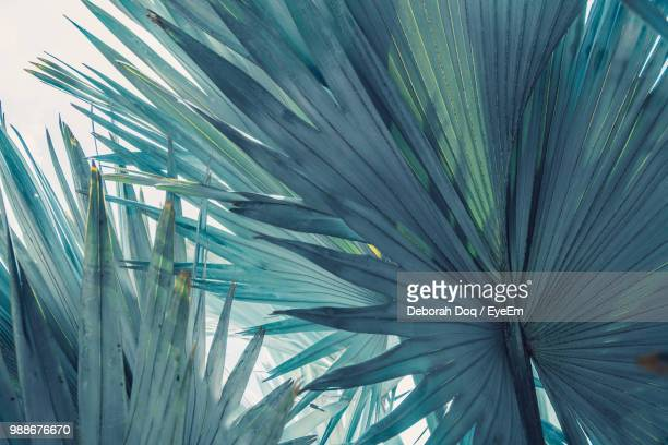 close-up of palm leaf - martinique stock photos and pictures
