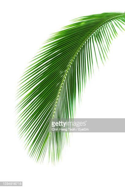 close-up of palm leaves against cloudy sky - palma foto e immagini stock