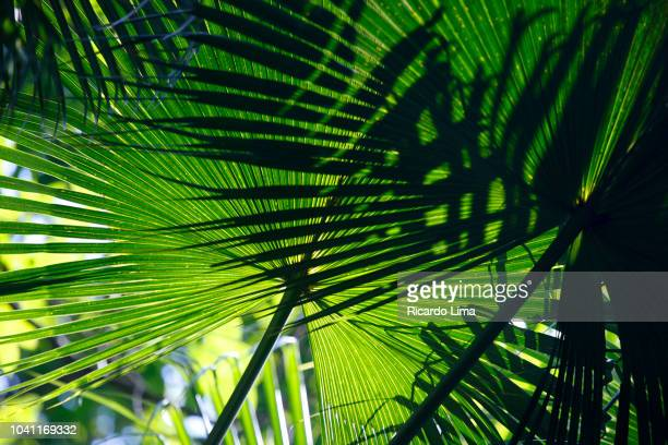 Close-up Of Palm Leaves In Amazon Rainforest, Brazil