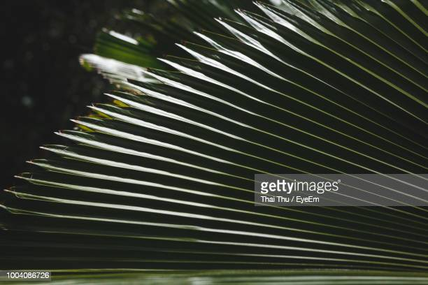 close-up of palm leaves - date palm tree stock pictures, royalty-free photos & images