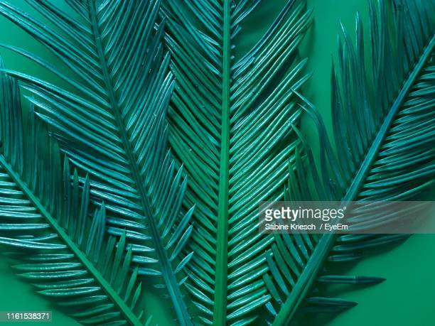 close-up of palm leaves - sabine kriesch stock-fotos und bilder