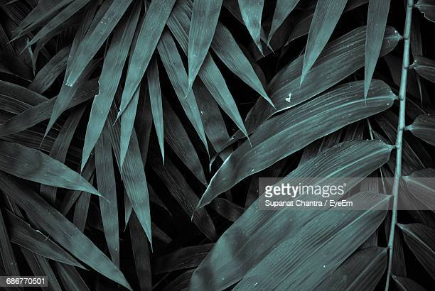 close-up of palm leaves - lozano fotografías e imágenes de stock