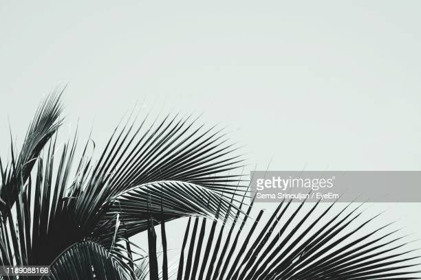 close-up of palm tree against clear sky - palm tree stock pictures, royalty-free photos & images