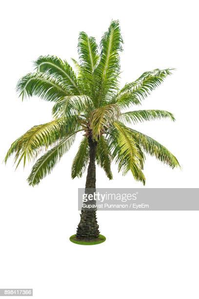 Close-Up Of Palm Tree Against Clear Sky