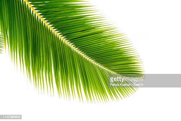 close-up of palm tree leaves - palm leaf stock pictures, royalty-free photos & images