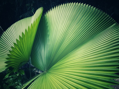 Close-Up Of Palm Tree Leaves - gettyimageskorea