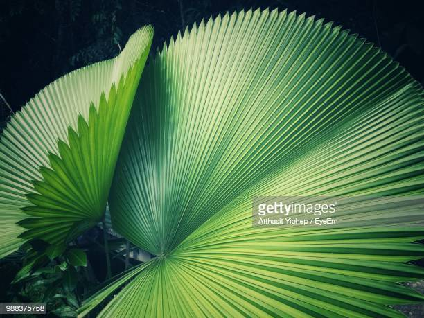 close-up of palm tree leaves - natural pattern stock pictures, royalty-free photos & images