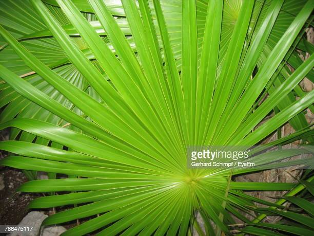 close-up of palm tree - gerhard schimpf stock photos and pictures