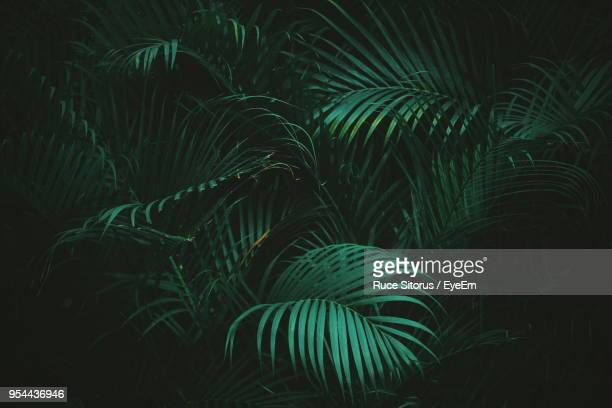 close-up of palm tree - palm tree stock pictures, royalty-free photos & images