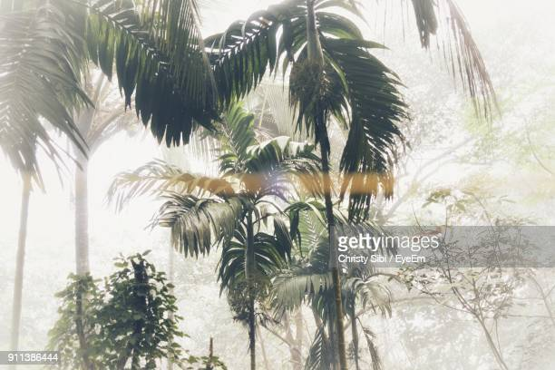 close-up of palm trees against sky - toned image stock pictures, royalty-free photos & images