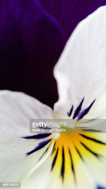 Close-Up Of Pansy Blooming In Park