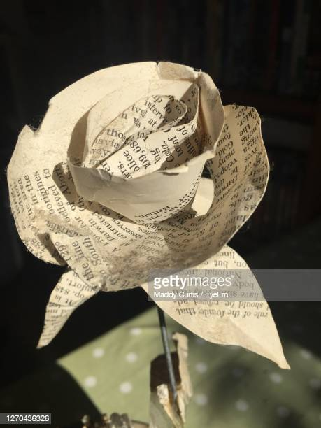 close-up of paper flower - single word stock pictures, royalty-free photos & images
